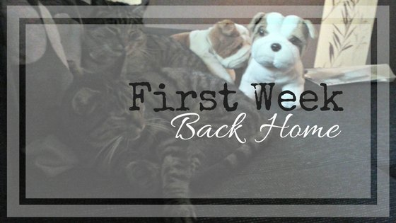 First Week Back Home | Live Now – Dream Later Travel Blog